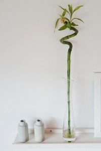 zimmerpflanzen die auch bei dir berleben. Black Bedroom Furniture Sets. Home Design Ideas