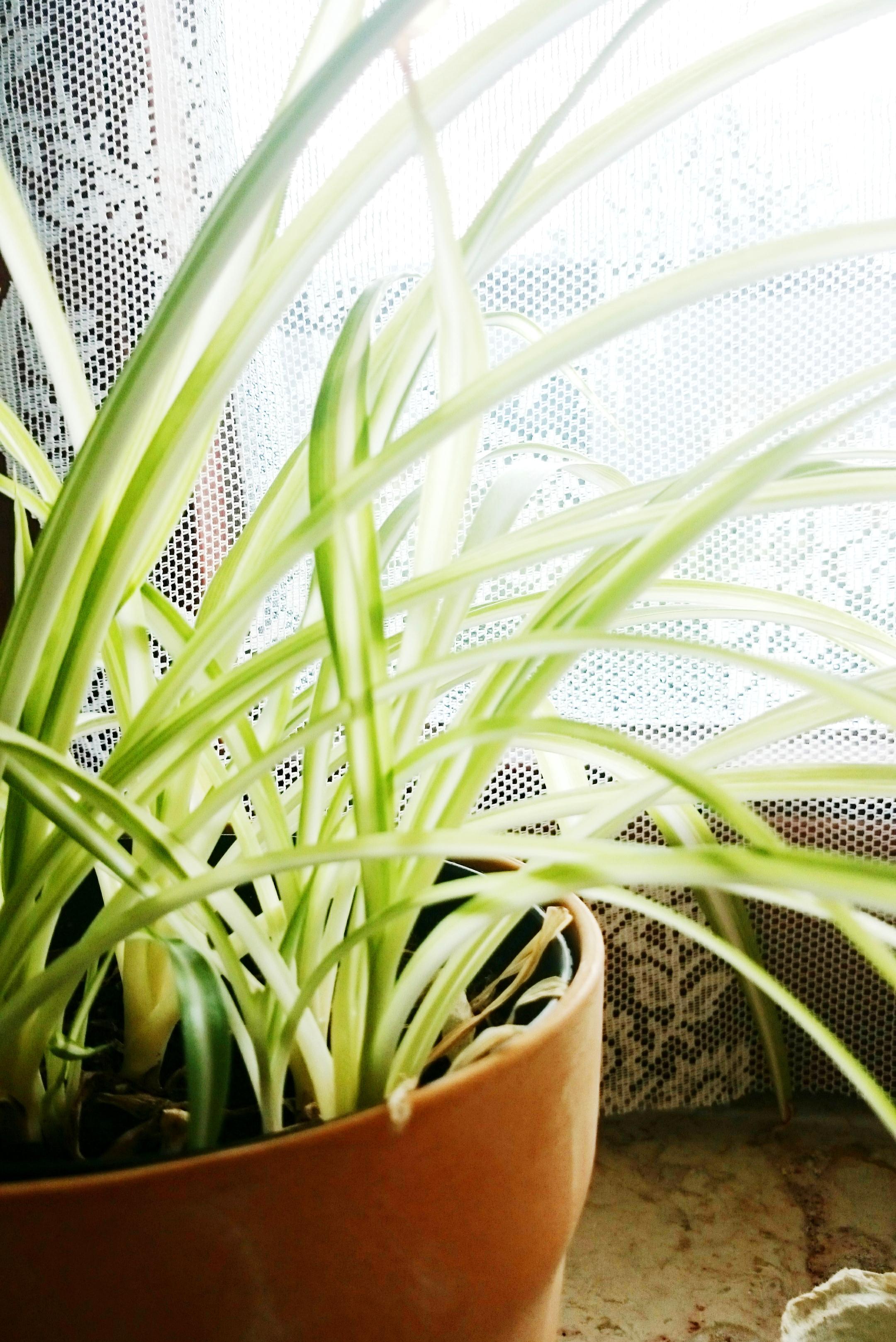 Zimmerpflanzen die auch bei dir berleben for Zimmerpflanzen umpflanzen