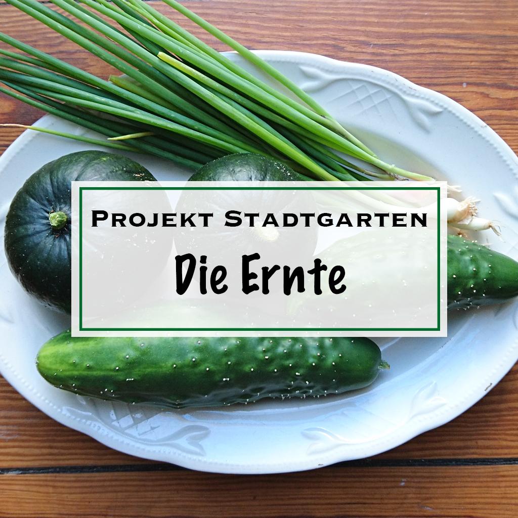 Projekt Stadtgarten Ernte